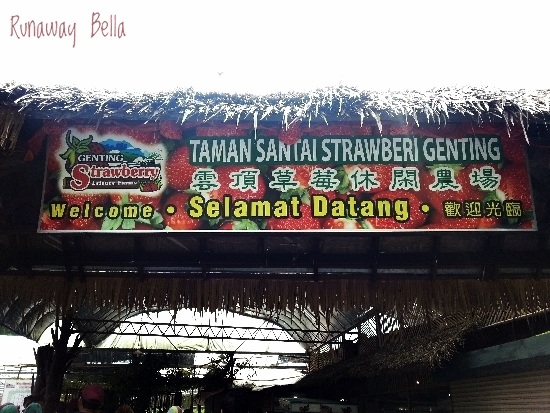 Genting Highlands Strawberry Leisure Farm