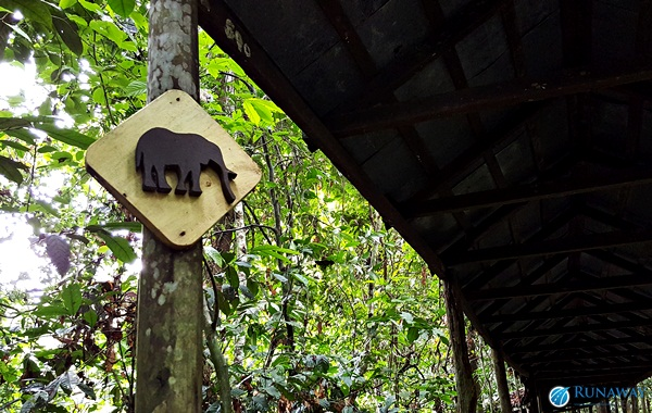 Activities at Sukau Rainforest Lodge