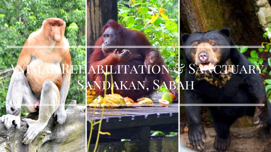 3 Must-Visit Animal Rehabilitation and Sanctuary Centre In Sandakan, Sabah
