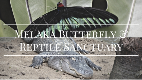Spend Half A Day At Melaka Butterfly & Reptile Sanctuary