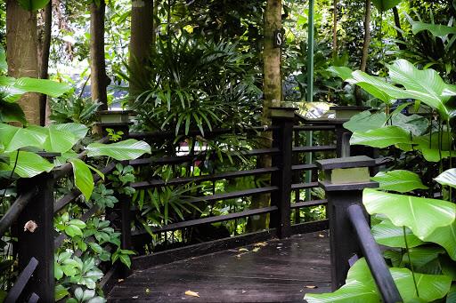 KLIA Hidden jungle
