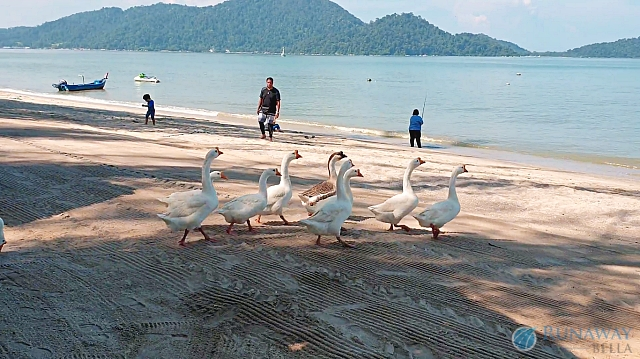 Activities to do at Swiss-Court Holiday Apartments Damai Laut
